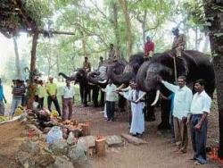 Tribals offer prayers to elephants in Dubare forest