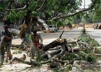 Tagore Circle underpass to claim 73 trees