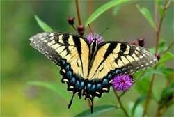 Vivid colours of butterflies could help cut bank fraud