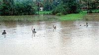 Heavy rains lash DK