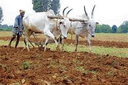 Agriculture activities begin on brisk note in district