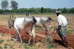 'Bhoo Chetana' for increasing ragi production