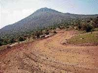 Additional forest area opened up for mining