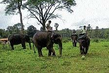 Its playtime for elephants at Dubare camp