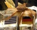 Octopus oracle Paul to retire