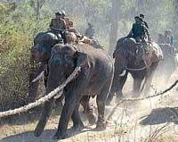 Villagers demand permanent solution to wild elephant menace