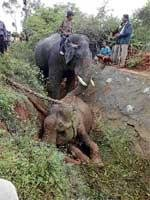 Female jumbo falls into ditch