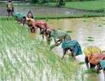 Kharif crops sown in more area this year
