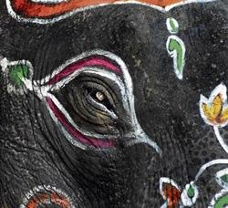 Balarama to carry howdah for the last time?