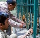 Tigers Minchu, Arya still very critical