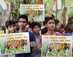 Tiger deaths: Infection cause yet to be ascertained
