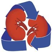 How diabetes affects the kidneys