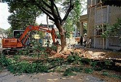 Axing branches of trees: CMC invites wrath from public