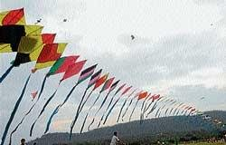 Festive mood soars high with kites