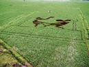 Designs on a paddy field