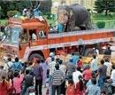 Dasara jumbos bid adieu with style