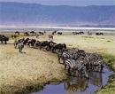 Serengeti road plan lined with prospect and fears
