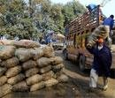 Pak traders exporting onions to India despite low production