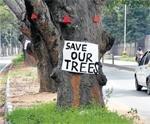 1,223 trees face the axe