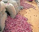 Govt lifts ban on onion exports