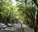 Four more Cubbon parks planned in Bangalore