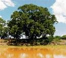 Venkatapura's green heritage