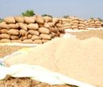 59 pc of PDS grains do not reach households: World Bank report