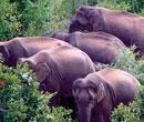 Lok Adalat for return of land to elephants