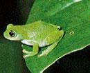 Project to reclaim lost amphibians