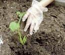 Happy gardening, healthy eating!