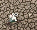 Karnataka MPs protest for drought relief