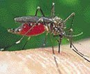 Drug-resistant malaria may spread, India warned