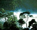 Plants react to sound, make noises: Oz research
