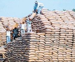Punjab's grain drain: No lessons learnt