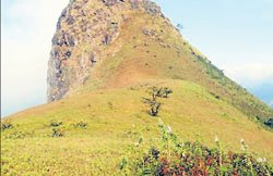 Enjoy nature on top of 'grazing buffalo'