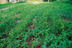 Weed menace adds to farmers' woes