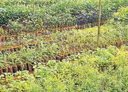 Plant saplings, avail benefits