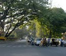 550 trees to be axed for flyover