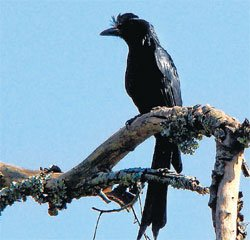 Bird census returns to BRT reserve forest after 15 yrs