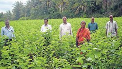 Sericulture changed this farmer's life