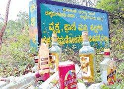'Pavithra Vana' loses its charm