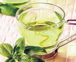 Green tea improves brain function in HIV patients