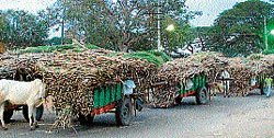 Mandya first to fix cane prices