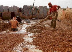 Bearing cocoon waste stench to earn daily bread