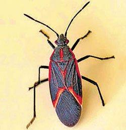 Bugs sunbathe to stay healthy, says study