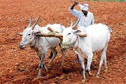 Farmer's suicide turns spotlight on Bagair Hukum cultivators