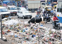 Palike looks beyond City for waste disposal