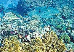 Underwater robots to repair coral reefs