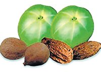 Triphala holds out hope on cancer
