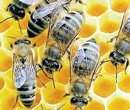Bees delay flight by an hour